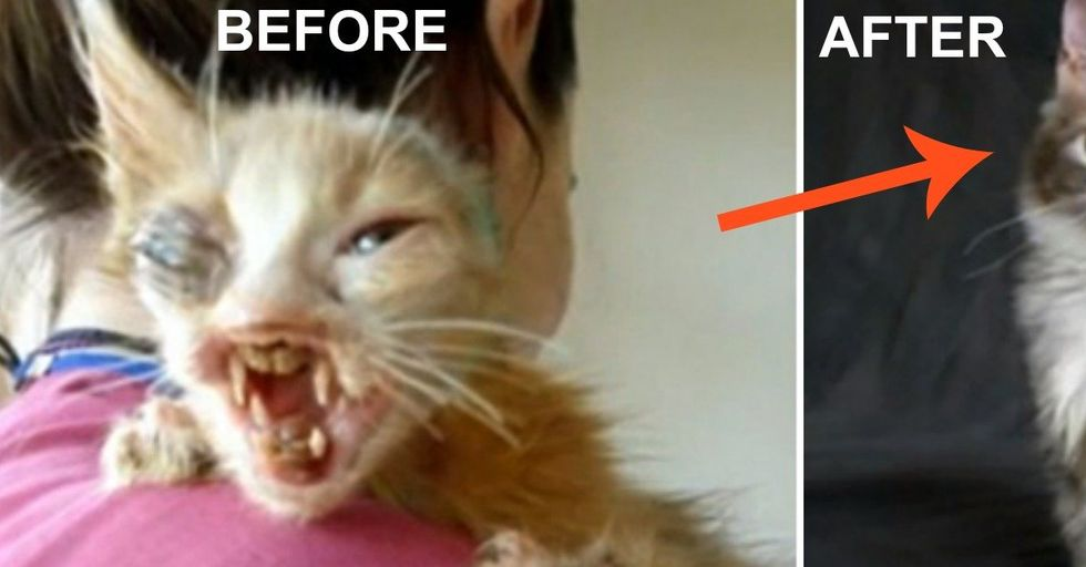 A 7-Year-Old Girl Rescues Deformed Cat That No Adult Would Care For