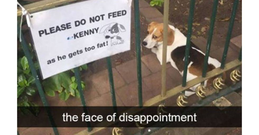 45 Amazing Snapchats That Prove Animals Are WAY Funnier Than People
