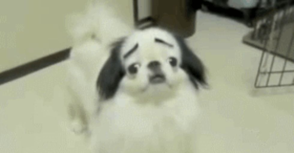 These Are the Best Dog GIFs On the Internet. Period.