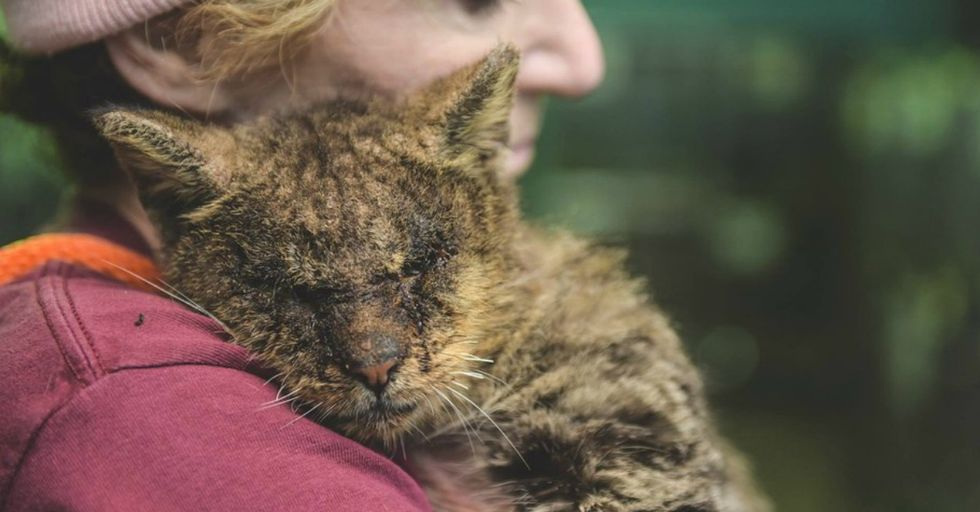 With One Little Hug...Rescuer SAVES Cat No One Would Touch's Life