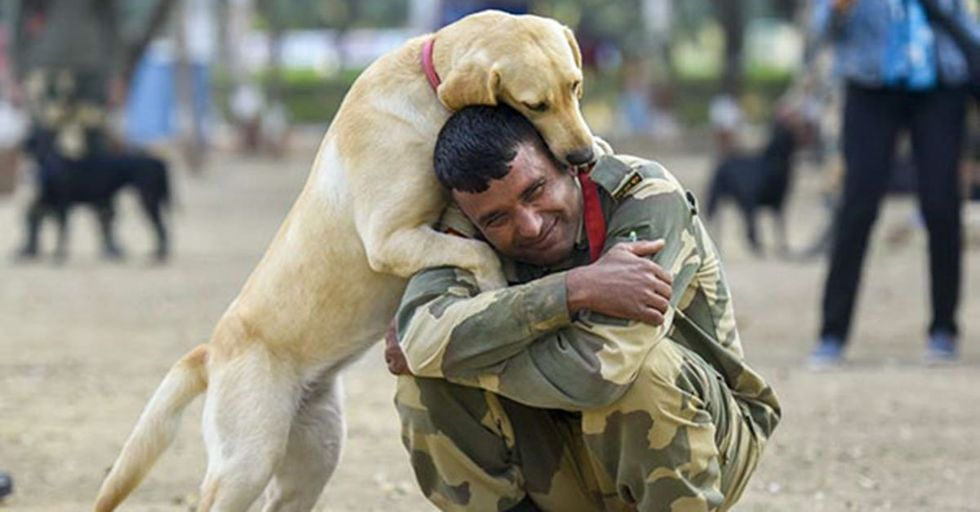 20 Photos of Military Service Dogs That Perfectly Capture Their Loyalty and Bravery