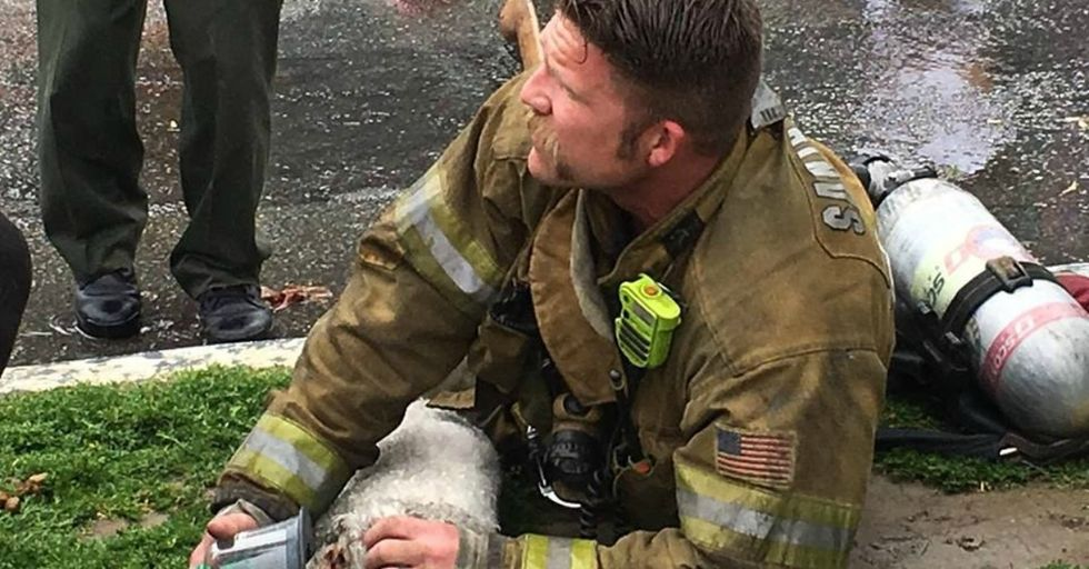 Firefighter Wouldn't Give Up On Tiny Dog He Saved From Burning Building
