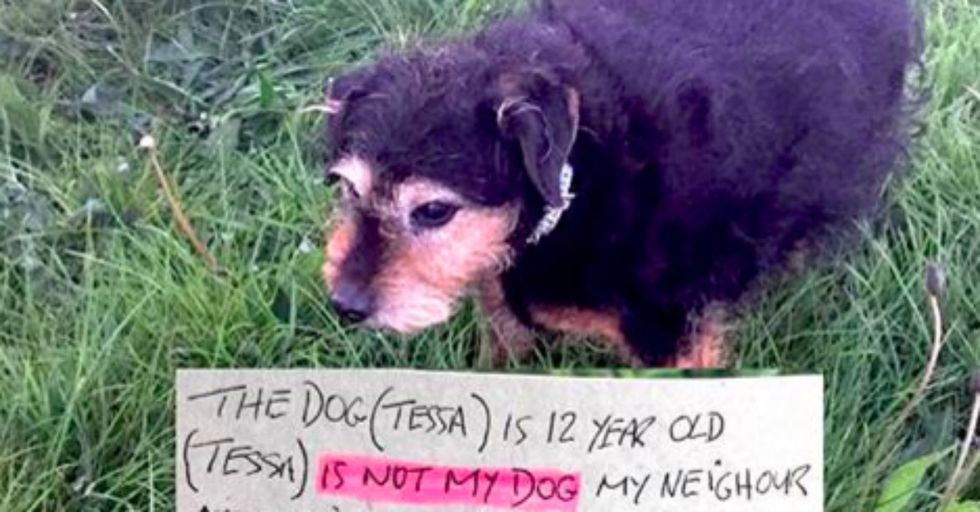 Sweet Older Dog Was Found With a Note That Will Make Your Blood Boil