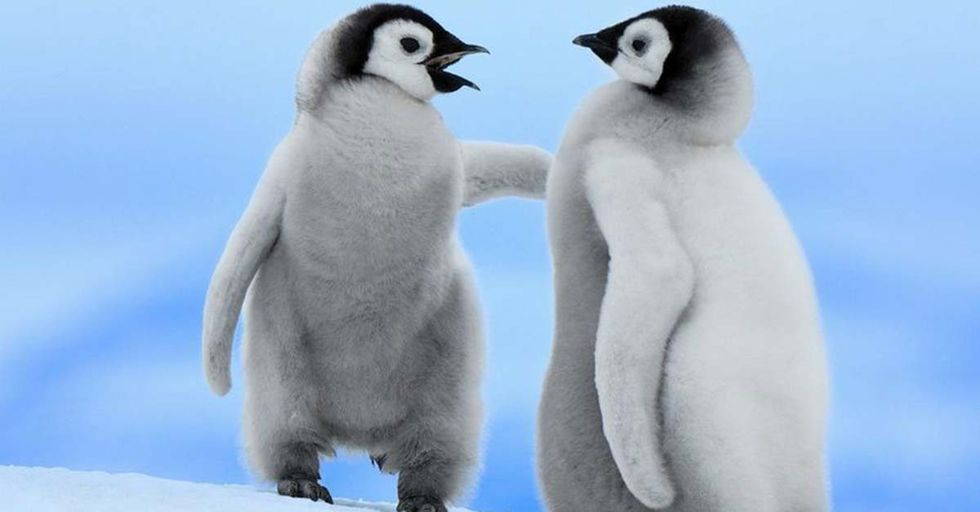 Amazing (and Hilarious) Facts You Never Knew About Everyone's Favorite Bird...Penguins!