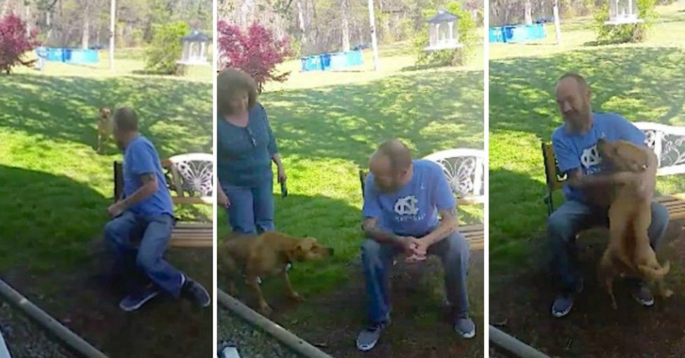 This Dog Had a SURPRISING Reaction To His Owner's Drastic Weight Loss