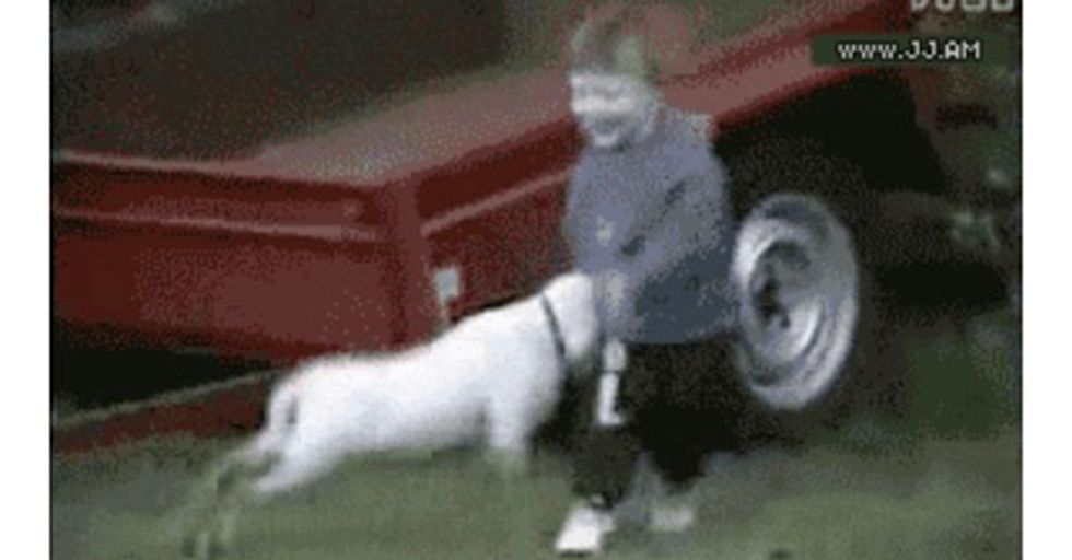 18 GIFs That Show Little Kids Getting Taken Out HARD By Their Pets
