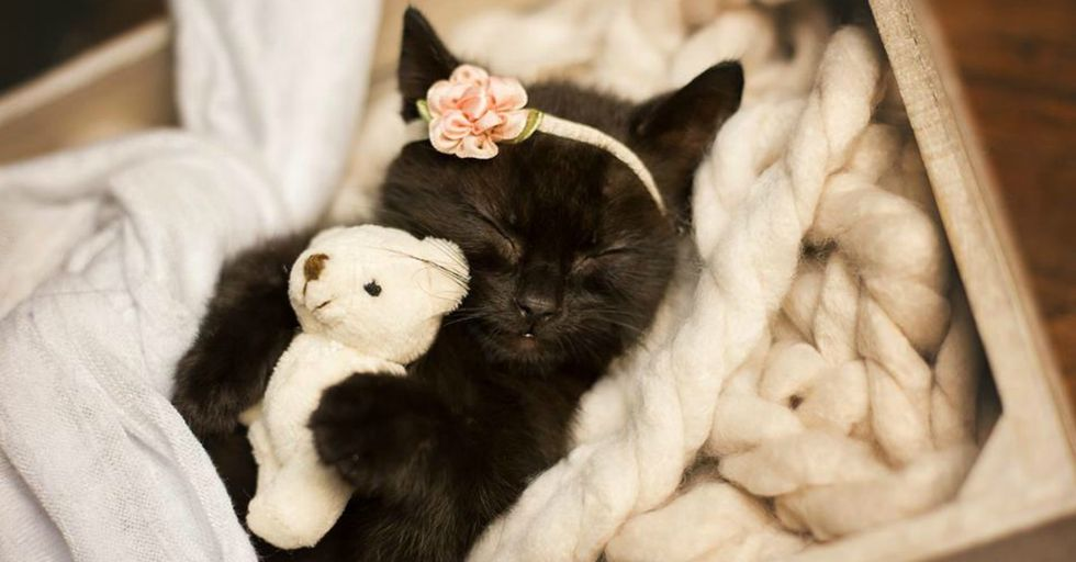 There's MUCH More To This Adorable Newborn Kitten Photoshoot Than What Meets the Eye