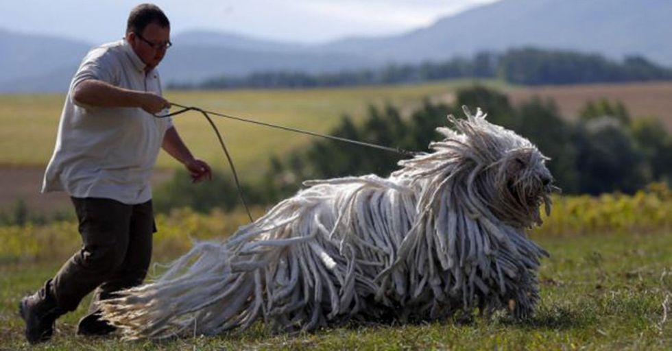If You're a Fan of Big Dogs, Get Familiar With These 18 GIANT (and Cute) Breeds
