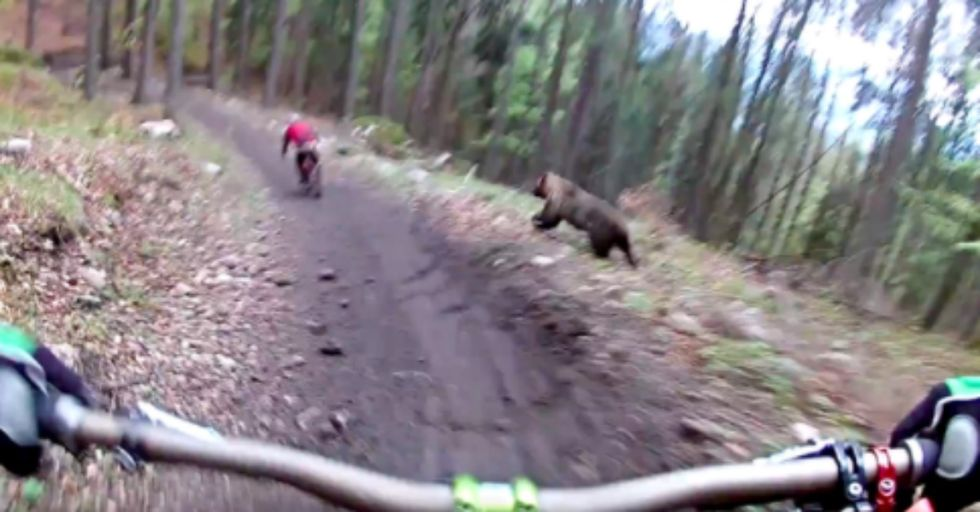 A Helmet Cam Captured a Huge Bear Charging After Mountain Bikers
