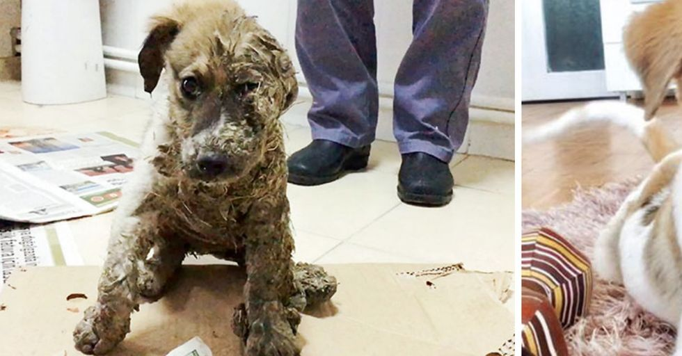 This Puppy Tormented By Kids and Covered In Glue Got a Life-Changing Makeover
