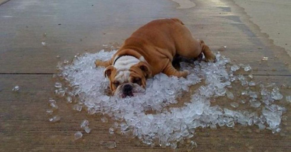 Animals Can Get VERY Clever When They're Thinking of Ways To Beat the Heat
