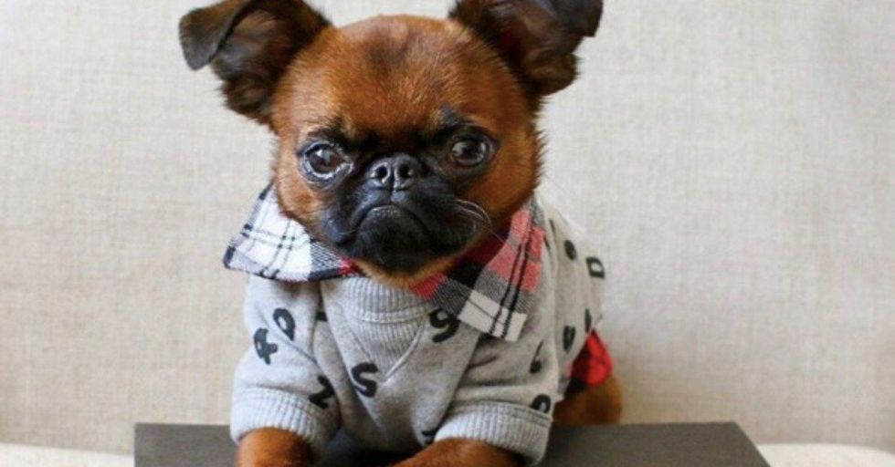 You Need To See These Obscure Ridiculous-Looking Dog Breeds Right Now