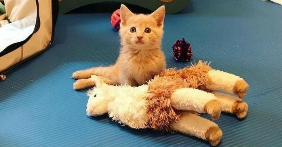 Vets Said This Paralyzed Kitten Would Never Recover, But She Surprised Everyone...