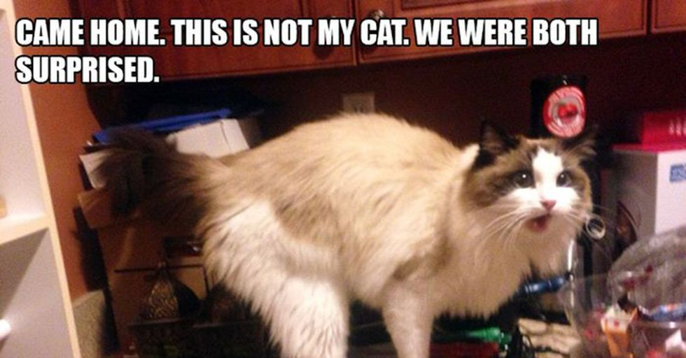 13 Hilarious Times Cats Just Invited Themselves Over To Strangers' Homes