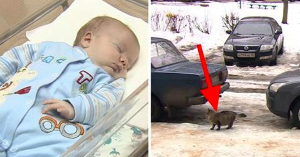 A Baby Was Abandoned and Left To Freeze To Death...Until a Cat Did THIS