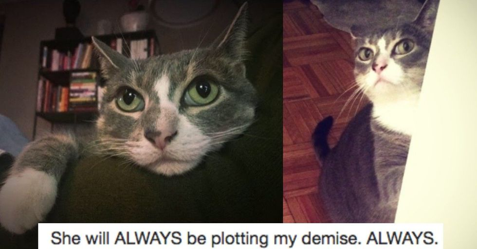 Hilariously Honest 'Missing' Flyer Helps 'Jerk' Cat Return Home