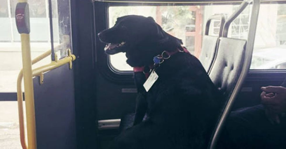 Every Day, This Clever Dog Rides the Bus ALONE To Her Favorite Park