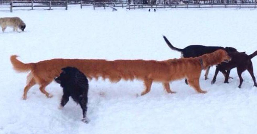 17 Panoramic Picture Fails That Are the Perfect Mix of Funny and Weird