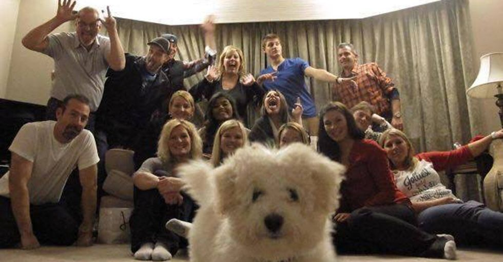 We Can All Agree That These Dog Photobombs Actually Make Pictures BETTER