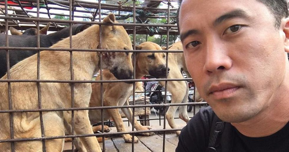 Heroic Man Saves 1,000 Dogs From Being Slaughtered For Food