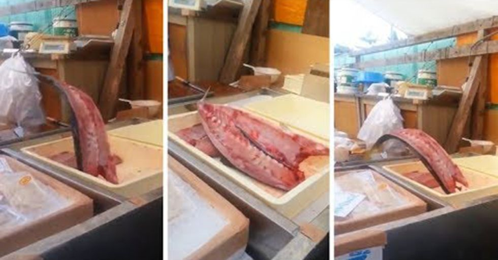 This Video of a Restaurant Fish Still Moving Might Just Make You a Vegetarian