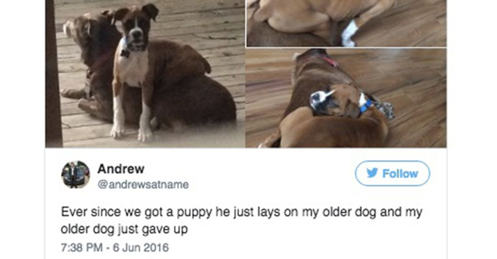 13 Pics That Prove Dogs Can Be Jerks AND Adorable at the Same Time