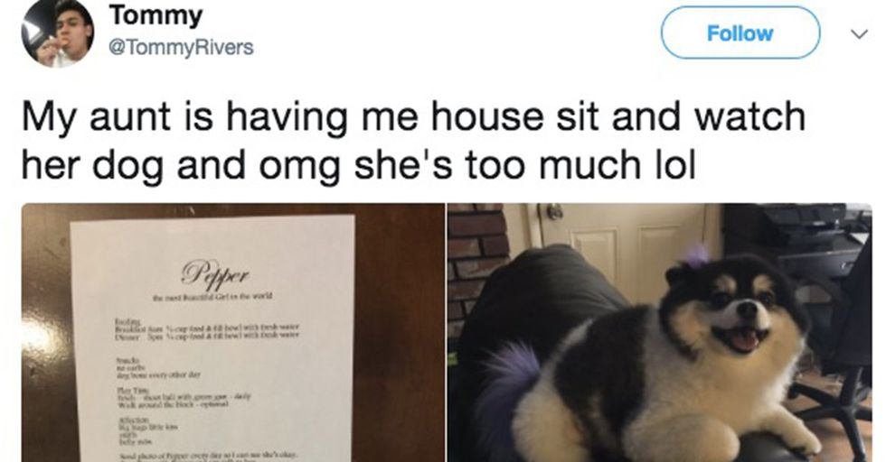 This Aunt's Hilarious Rules For Babysitting Her Adorable Dog Will Make You Smile