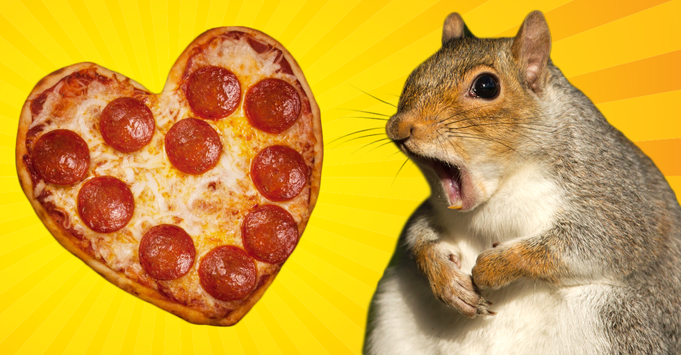 Remember Pizza Rat? Well a New Pizza-Loving Critter Has Stolen Our Hearts