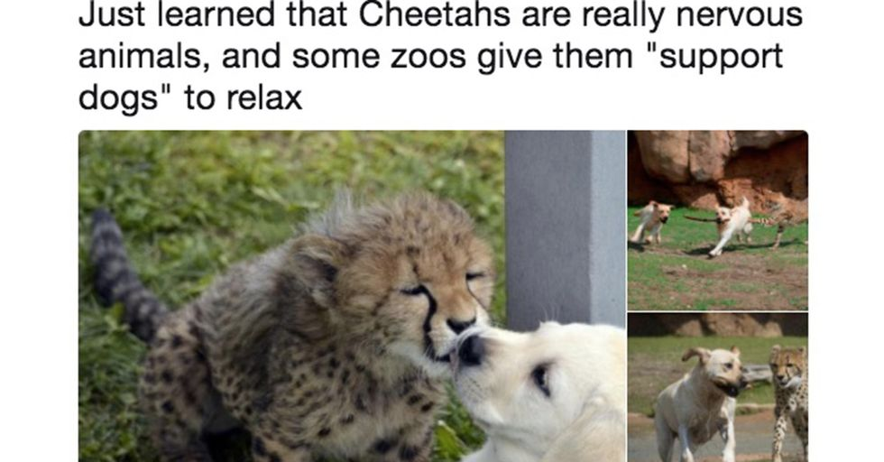 15 Feel-Good Animal Tweets to Help You Forget How Scary the World Is Right Now