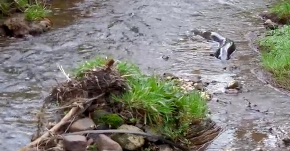 This Gigantic Eel Is the Stuff of Nightmares —and You're Going to Want to See It