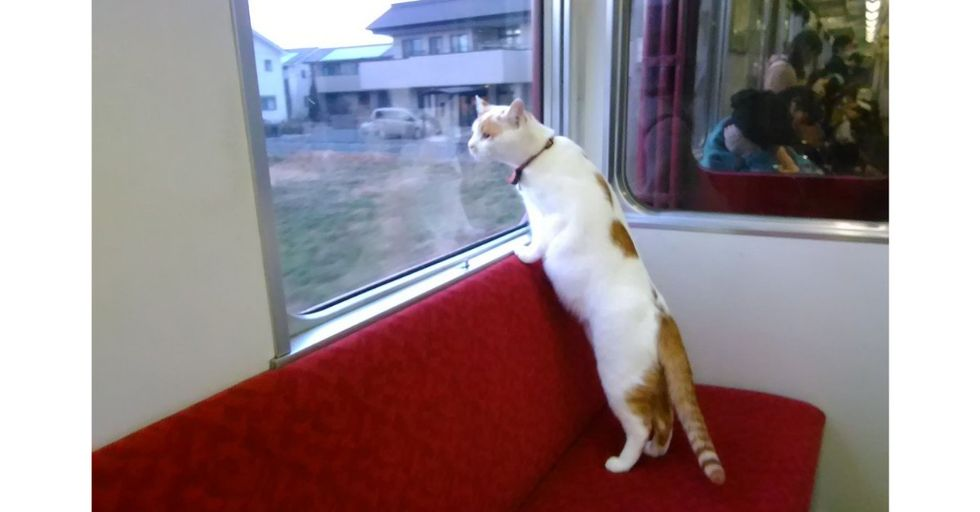 This Adorable Japanese Train Filled with Adoptable Stray Kittens Will Make Your Day
