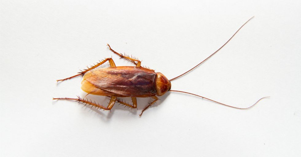 Cockroach Milk Is A Thing — And It's Surprisingly Good For You