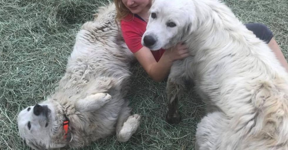 They Thought Their Dog Had Died In the Sonoma Fires...But He Actually Turned Out To Be a HERO!