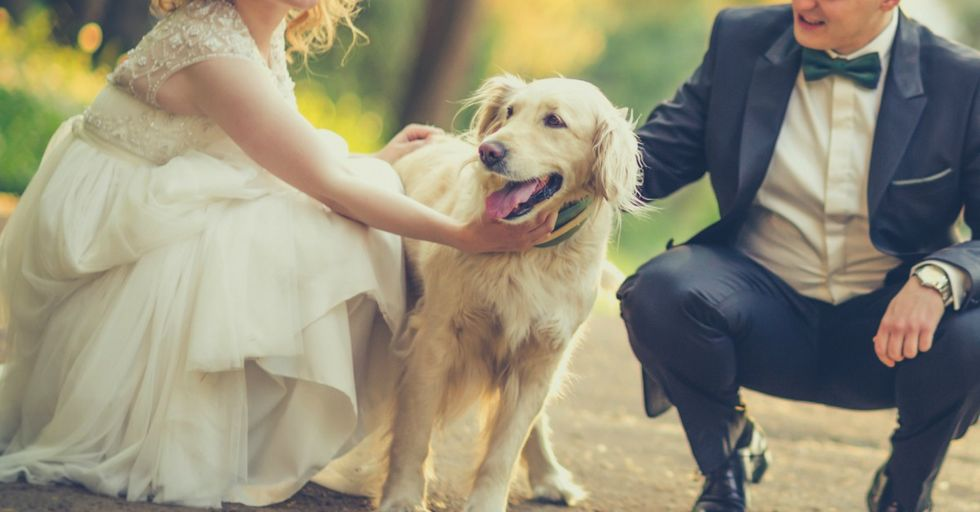 This Canine Wedding Crasher Got Best Wedding Present Ever When He Was Adopted By Newlyweds During Their Nuptials