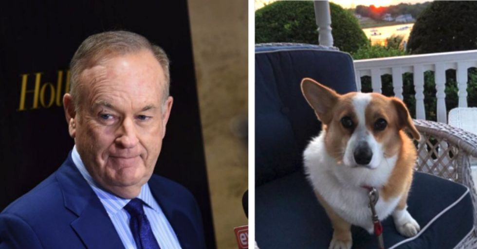 Bill O'Reilly Just Dragged His Dog into the NFL Kneeling Debate — and the Internet Is Not Having It