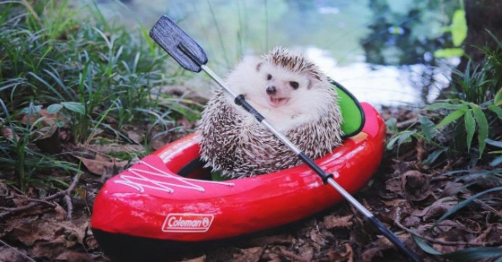 These Photos of a Tiny Hedgehog Going Camping Are the Cutest Thing You'll See All Day