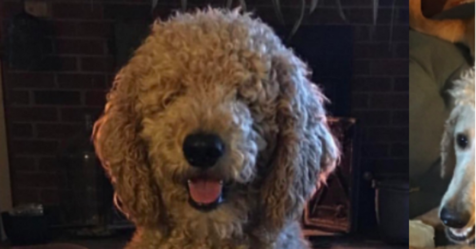Mom RUINS Dog With Terrible Haircut, and the Internet Can't Get Enough of This Ugly Pup