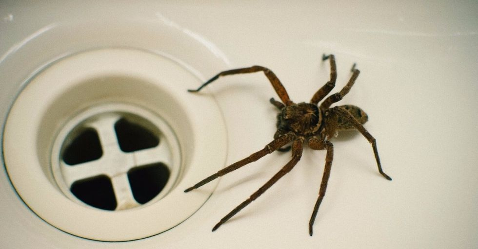 This Is the WORST Possible Way To Kill a Spider
