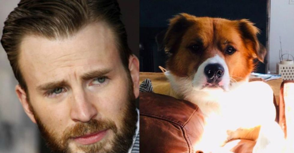 Chris Evans Just Delighted the Internet With an Adorable Video of His Dog 'Singing'