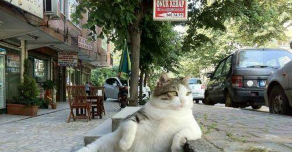 This Fat Street Cat Just Got His Own Memorial Statue and It's Making Locals Ridiculously Happy