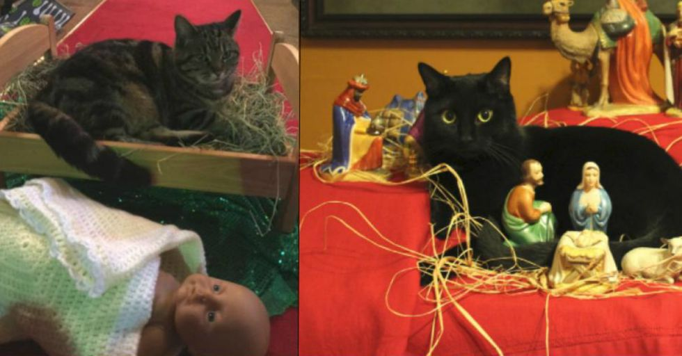 'If I Fits, I Sits,' Said These 12 Cats Who Decided to Ruin Their Humans' Nativity Scenes
