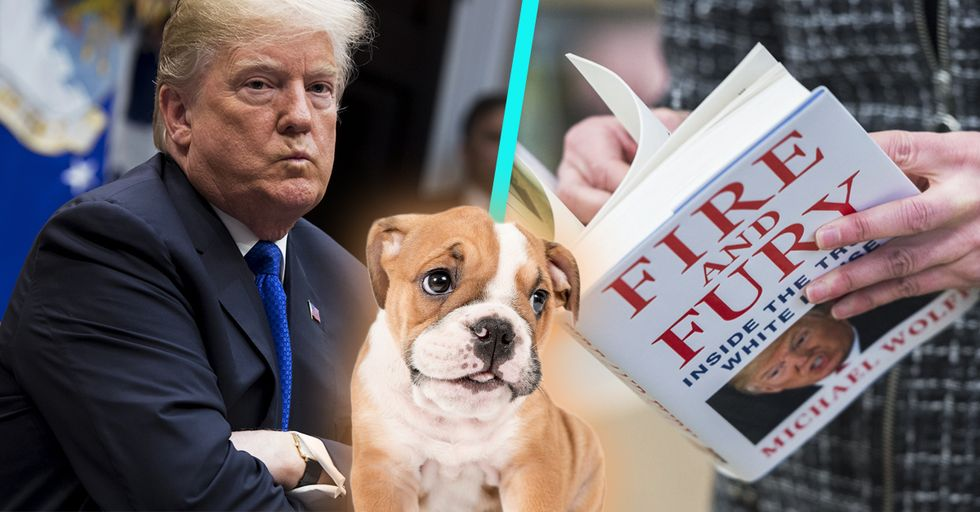 Here Are the Most Explosive Details From Trump Tell-All Book Next to Pictures of Cute Puppies