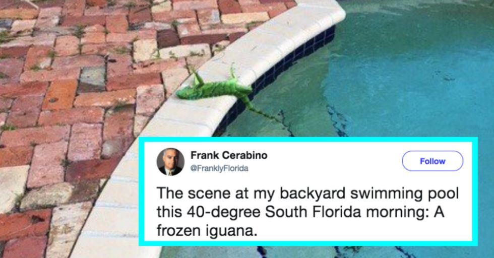 It's So Cold in Florida That Lizards Are Falling From the Sky