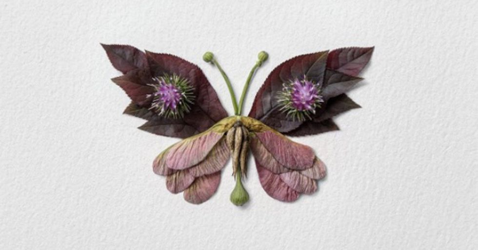 An Artist Is Constructing Gorgeous Insect Art Out of Nothing but Flowers and Plants