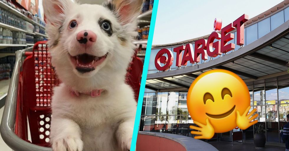 Corgi Puppy's Adorable Trip to Target Ends up Becoming the Experience of a Lifetime