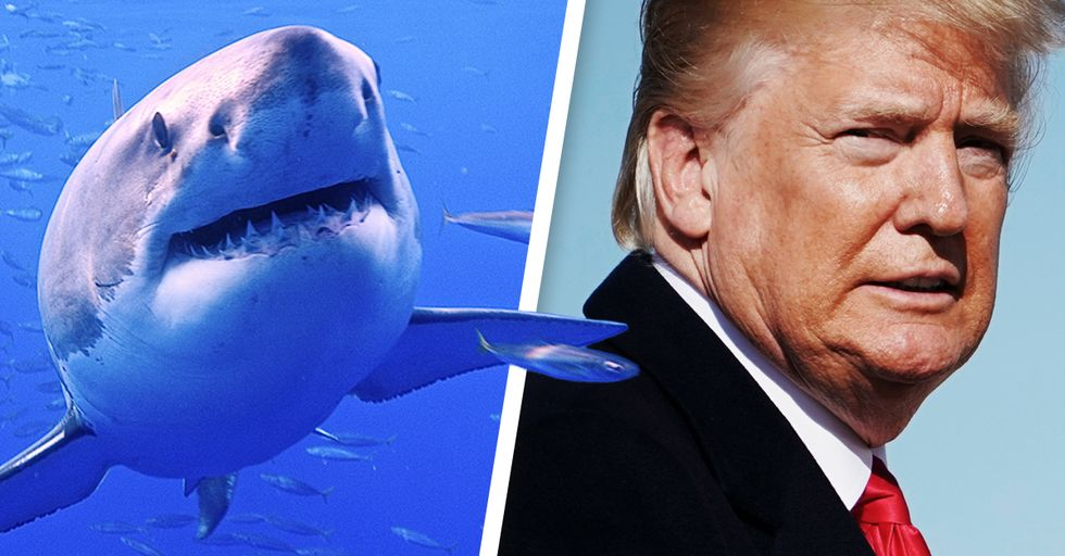 Donald Trump Hates Sharks, so People Are Giving Money to Shark Charities in Retaliation