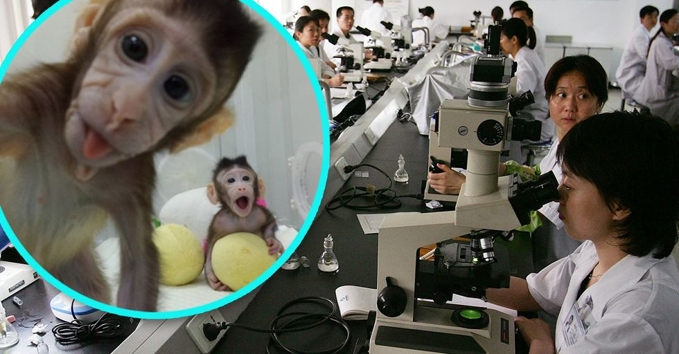 Researchers Have Cloned Monkeys, Which Means Human Cloning Is Around the Corner