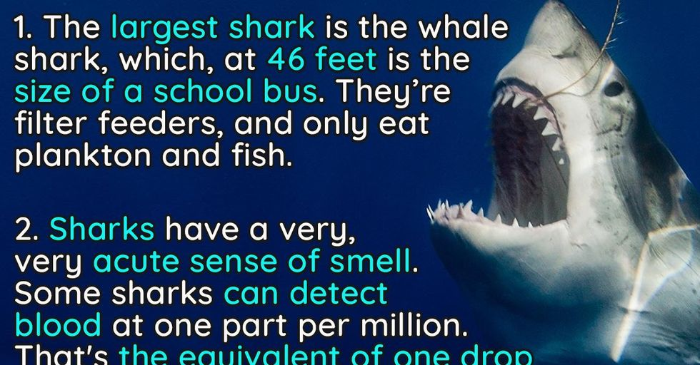10 Jaw-Dropping Facts About Sharks