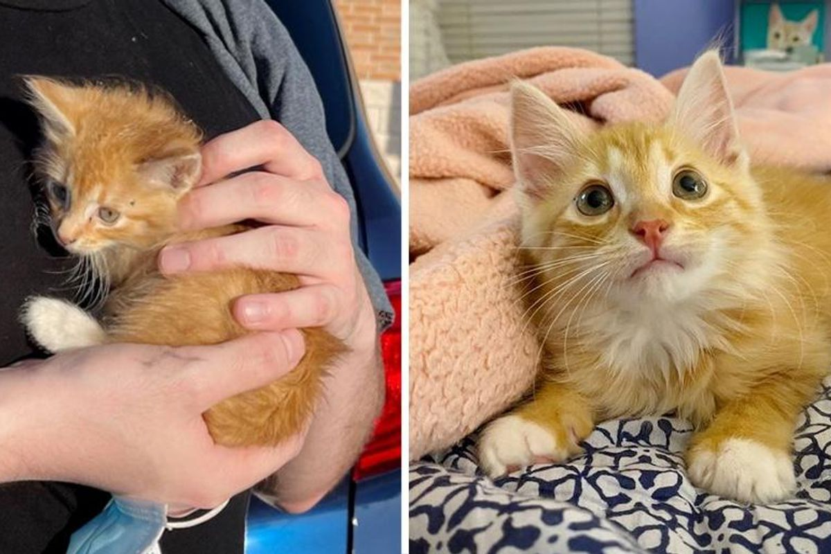 Stray Kitten Held onto Person Who Found Him Behind Forklift, His Life is Forever Changed