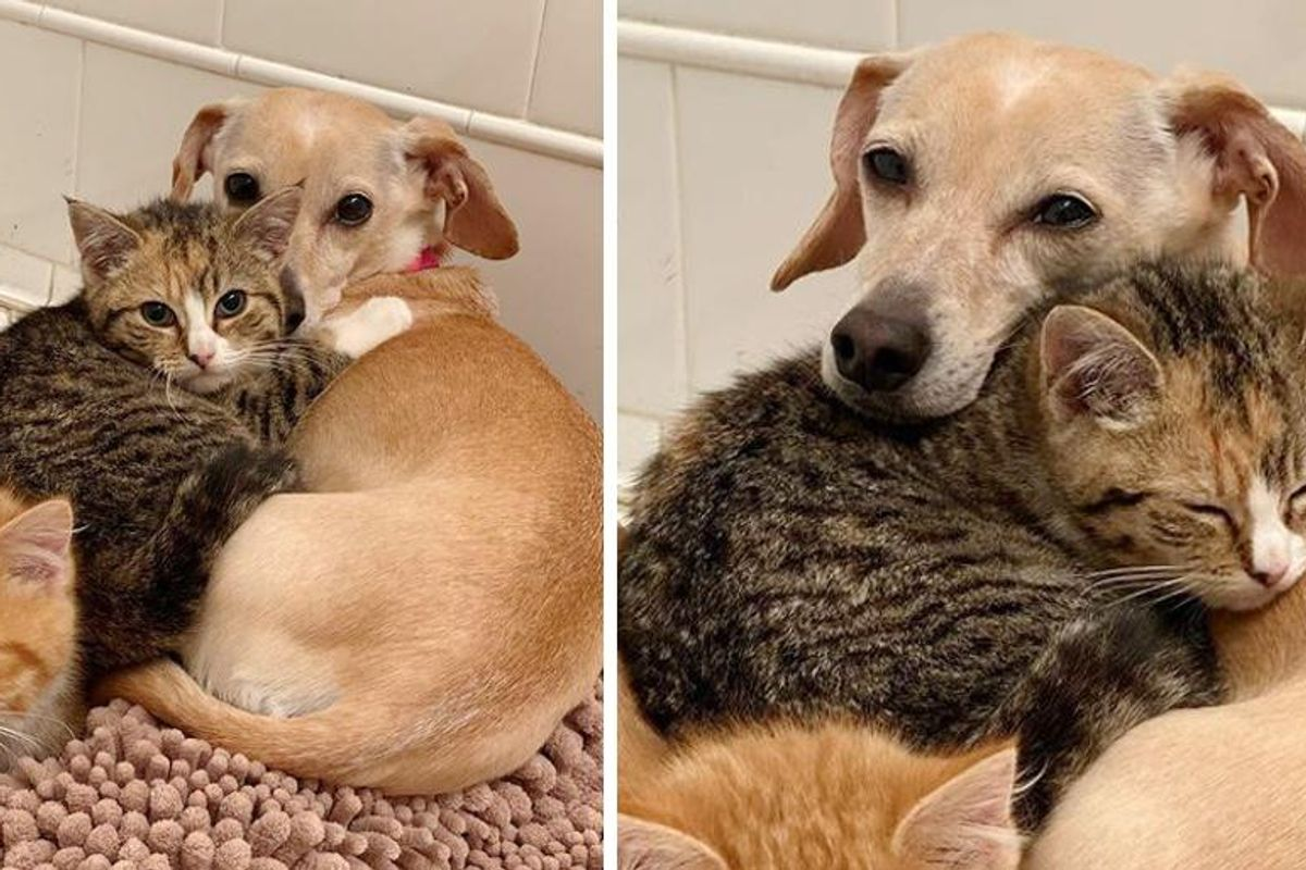Dog Takes Shy Kittens Under Her Wing and Shows Them Courage After They were Found in Backyard